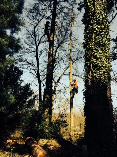 arborister